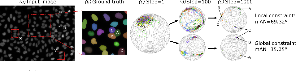 Figure 1 for Instance Segmentation of Biomedical Images with an Object-aware Embedding Learned with Local Constraints