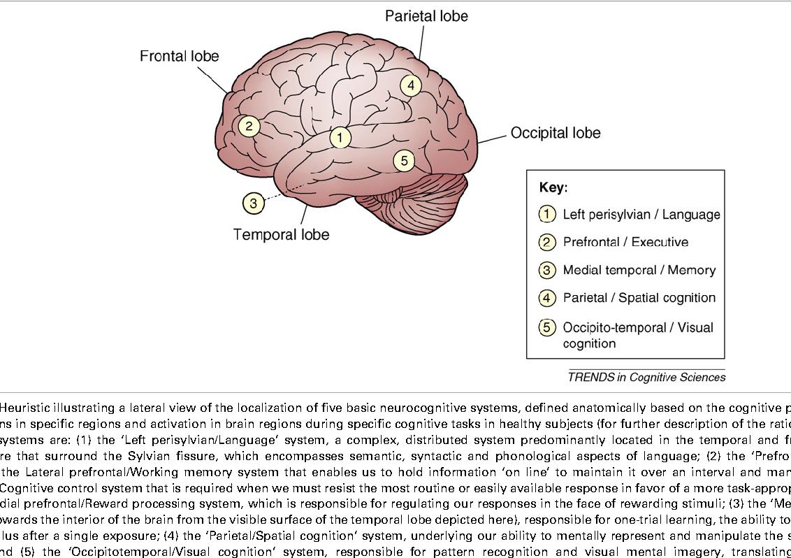 Socioeconomic Status And Developing >> Figure 1 From Socioeconomic Status And The Developing Brain