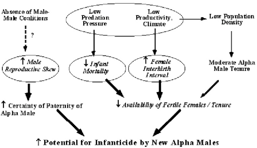 figure 3  diagram of proposed factors influencing the evolution of male  infanticide in chacma baboons