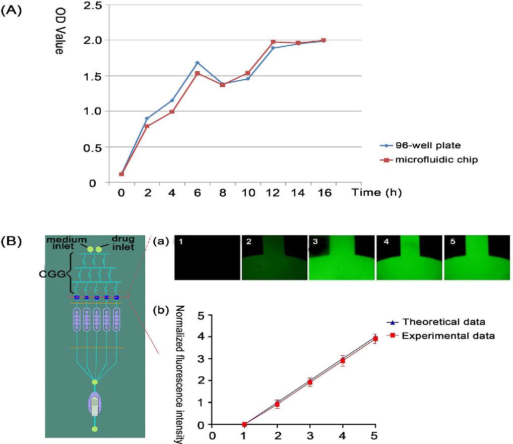 A novel microbead based microfluidic device for rapid bacterial figure 2 ccuart Choice Image