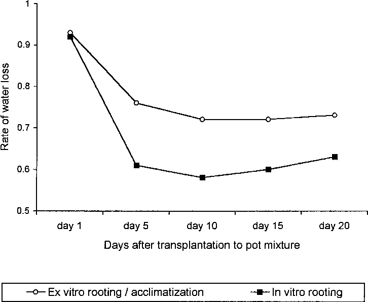 Fig. 1. Rate of water loss in a 20-day acclimatization period in C. minima plants derived from in vitro and ex vitro rooting treatments.