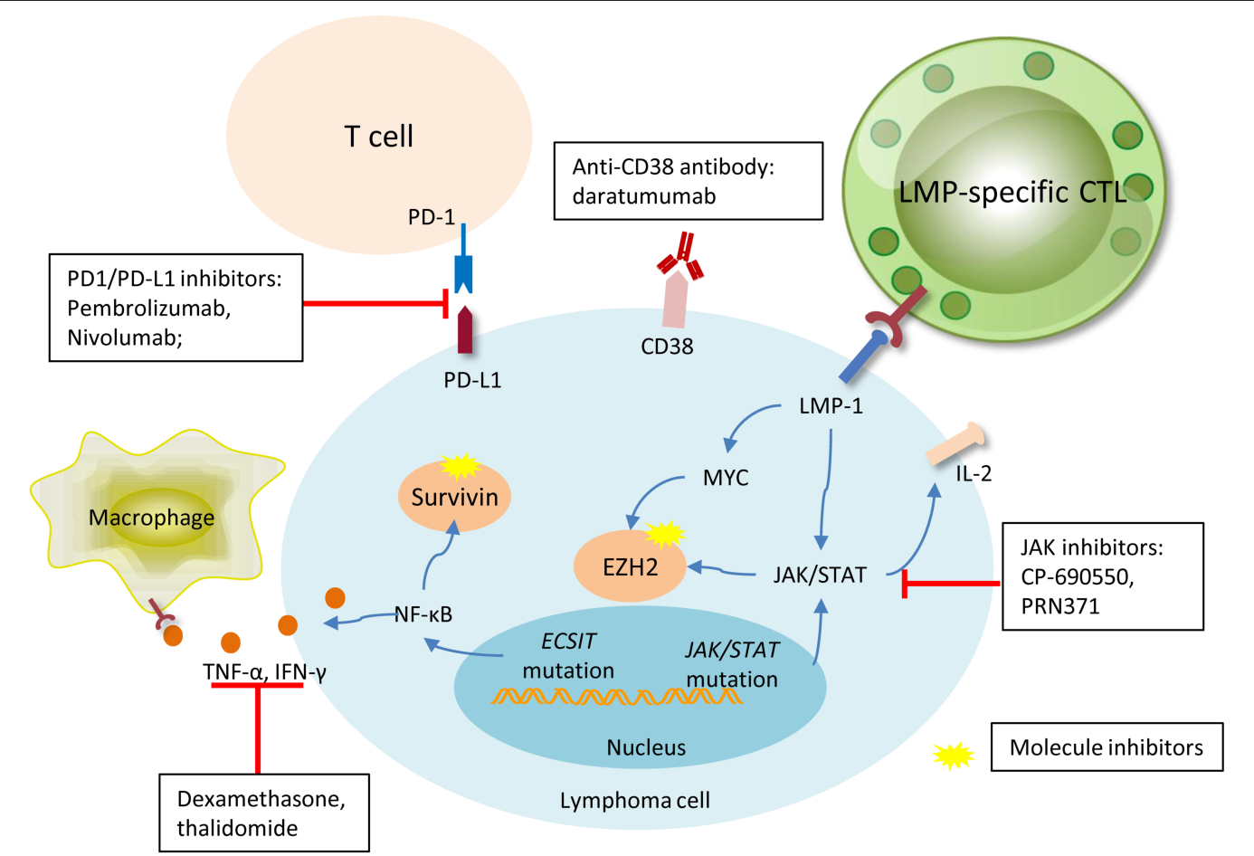 PDF] Epstein-Barr Virus-Positive Natural Killer/T-Cell Lymphoma