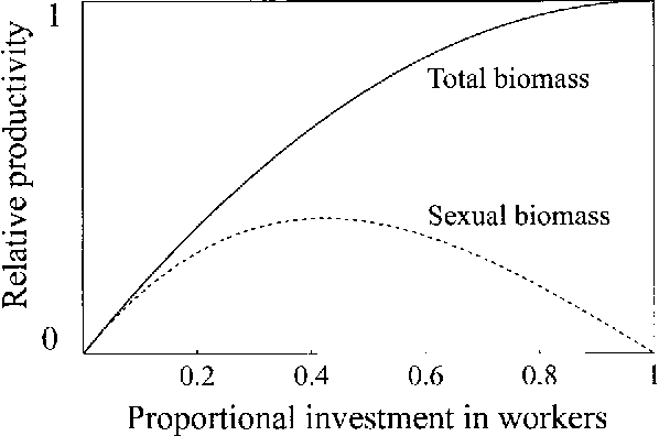 Figure 1: Relative productivity of a colony as a function of proportional investment in workers. The solid line shows the total productivity (workers and sexuals), the dotted line, the productivity of sexuals only.
