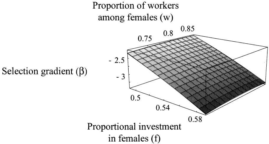 Figure 4: Selection differential (b) on a mutant female larva's probability to develop into a worker (q) as a function of egg sex ratio ( f ) and proportion of female larvae raised as workers (w).