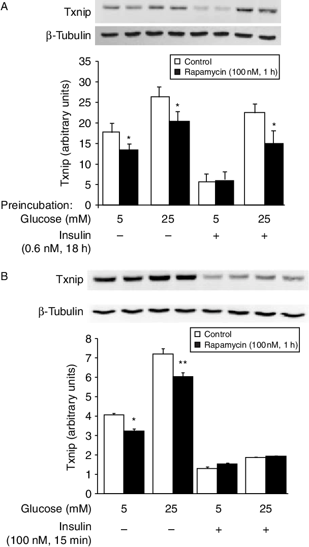 Figure 2 Rapamycin, a specific inhibitor of mTOR complex-1 activity, decreases Txnip. (A) The experimental design was identical to Fig. 1 except that instead of acute insulin stimulation the cells were exposed for 1 h to 100 nM rapamycin before immunoblotting. A representative blot is shown on top, while the bar graph illustrates the quantitative analysis of seven replicates from four separate experiments. Significant rapamycin effects (P!0.005–0.04 by paired analysis) are indicated by *. Rapamycin was ineffective when Txnip level was low, e.g. after preincubation in 5 mM glucose with 0.6 nM insulin. (B) Cells exposed to 5 or 25 mM glucose in 1% FBS for 18 h were incubated 1 h with 100 nM rapamycin before stimulating or not with 100 nM insulin for 15 min followed by immunoblotting. A representative blot is shown on top, while the bar graph illustrates the quantitative analysis of six replicates from three separate experiments. The effect of rapamycin in decreasing Txnip was only detected in the samples that did not receive insulin (*P!0.001 and **P!0.05).