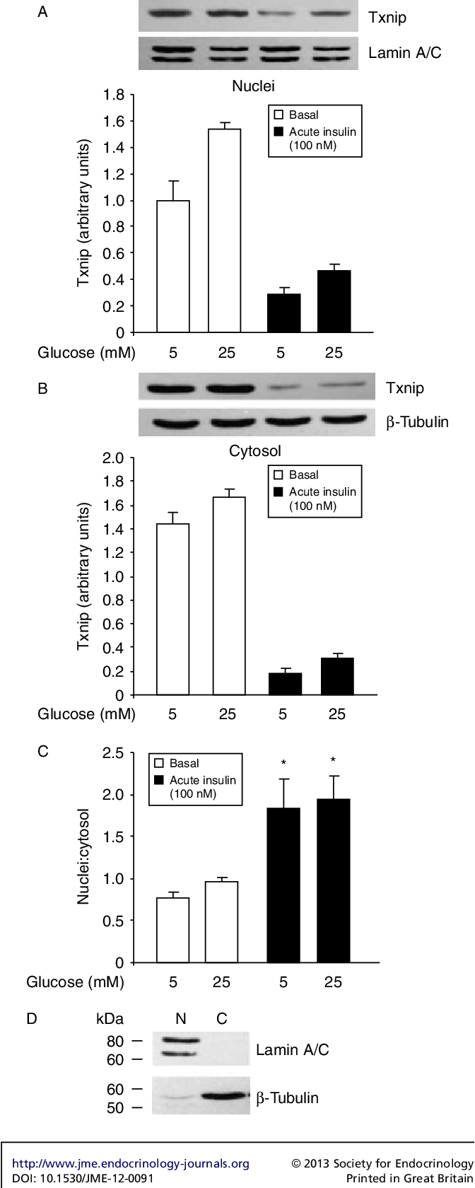 Figure 3 The effects of high glucose and acute insulin on the distribution of Txnip between nuclei and cytosol. (A, B and C) Cells were incubated for 18 h in media containing low (5 mM) or high (25 mM) glucose, 1% FBS and stimulated or not with 100 nM insulin for 15 min. Before analysis of Txnip by immunoblotting, cytosolic and nuclear extracts were prepared (Dignam et al. 1983). High glucose increases Txnip more in nuclei than in the cytosol. Acute insulin markedly decreases Txnip in nuclei and in the cytosol, but also promotes the transfer of Txnip into nuclei. Ratio of nuclei:cytosol increased approximately twofold after 15 min with insulin (*P!0.05). (D) Representative western blots of nuclear and cytosolic preps for the proteins lamin A/C (nuclear marker) and b-tubulin (cytosolic marker) showing appropriate fraction enrichment.