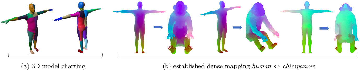 Figure 2 for Transferring Dense Pose to Proximal Animal Classes