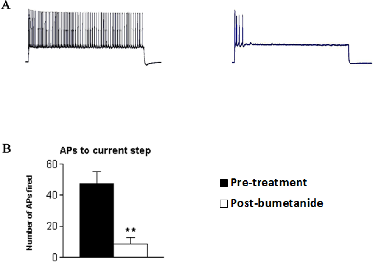 Figure 3-5: Reduced number of APs fired to an intracellular current injection postbumetanide treatment