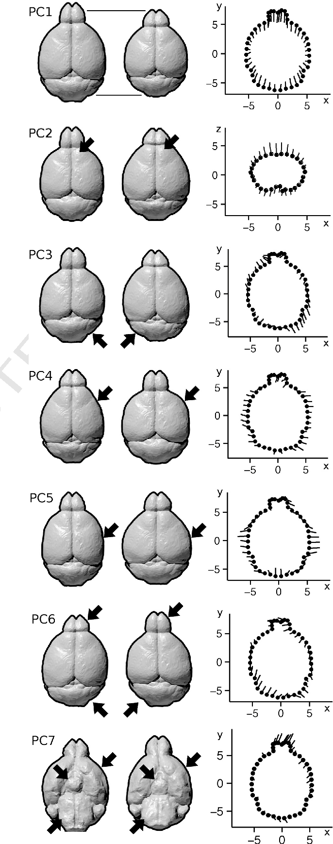 Variability of brain anatomy for three common mouse strains ...