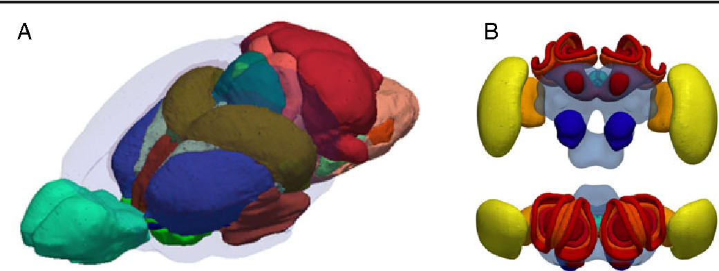 Figure 11 from Common Atlas Format and 3D Brain Atlas Reconstructor