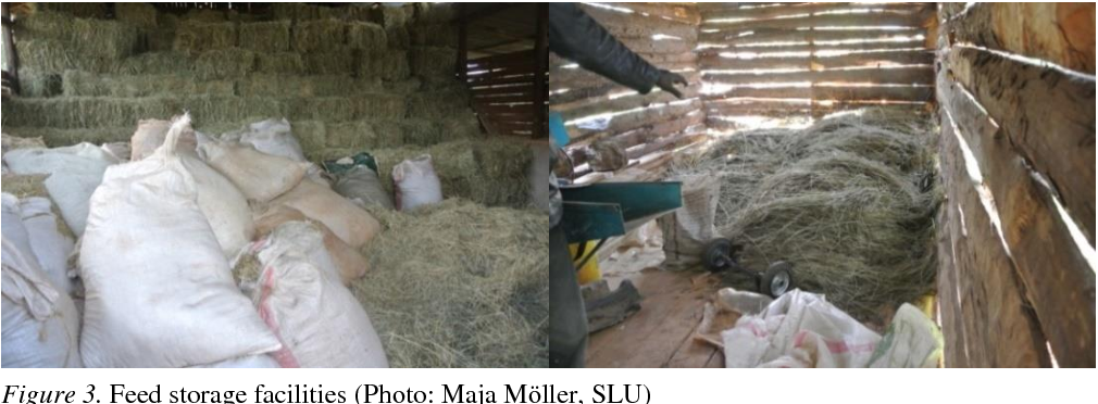 PDF] Feeding routines and feed quality on small-scale dairy farms in