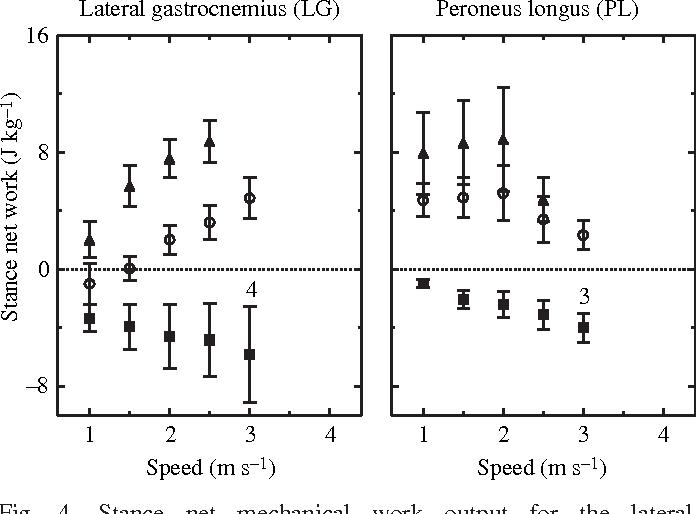 Peroneus Longus Muscle Structure Semantic Scholar