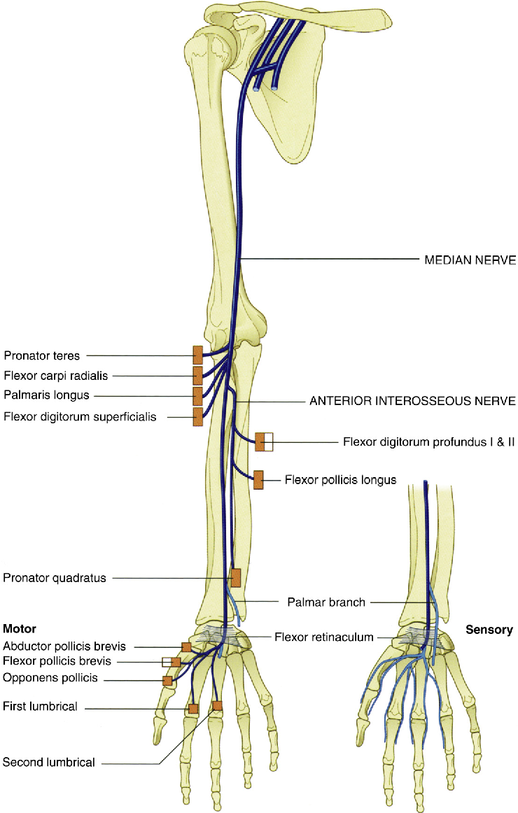 Evaluation and treatment of upper extremity nerve entrapment ...