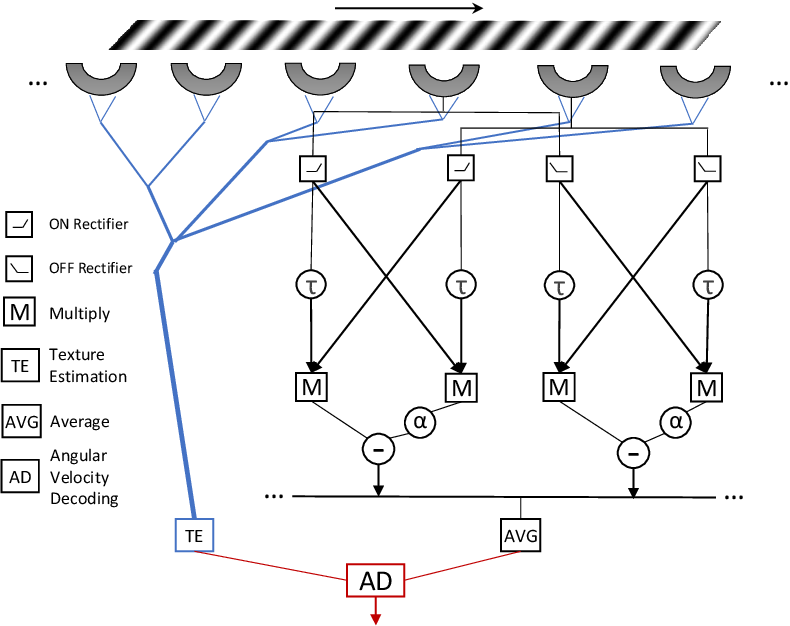 Figure 3 for Constant Angular Velocity Regulation for Visually Guided Terrain Following