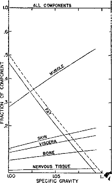 Figure 2 From Studies On Body Composition Ii Theoretical