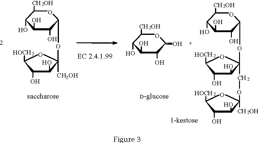 Biosynthesis Of Food Constituents Saccharides 2 Polysaccharides A Review