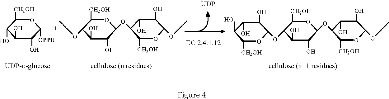 Biosynthesis Of Food Constituents Saccharides 2
