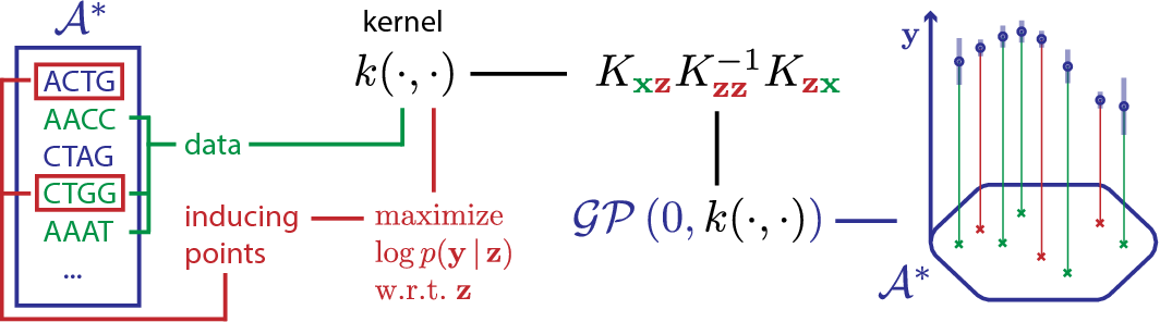 Figure 1 for Scalable Gaussian Processes on Discrete Domains
