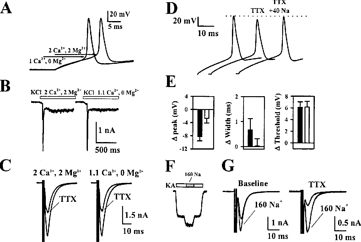 Figure 7. Alteration of Action Potential Waveform but Not Action Potential Threshold Partially Reverses the Effect of Dilute TTX
