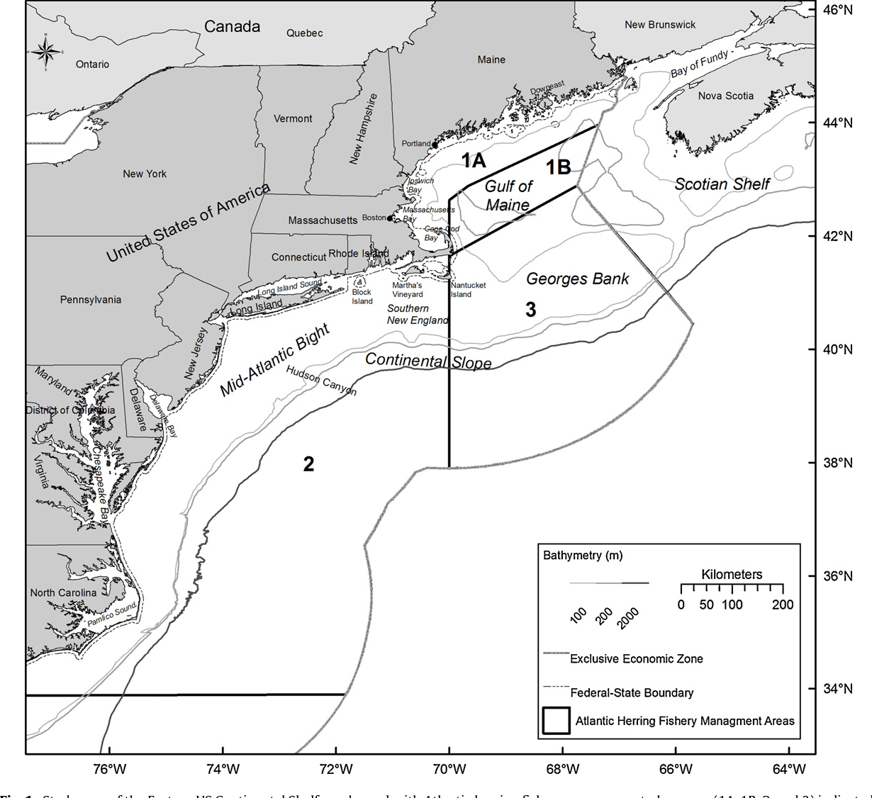 Spatial and temporal patterns of anadromous alosine bycatch in the