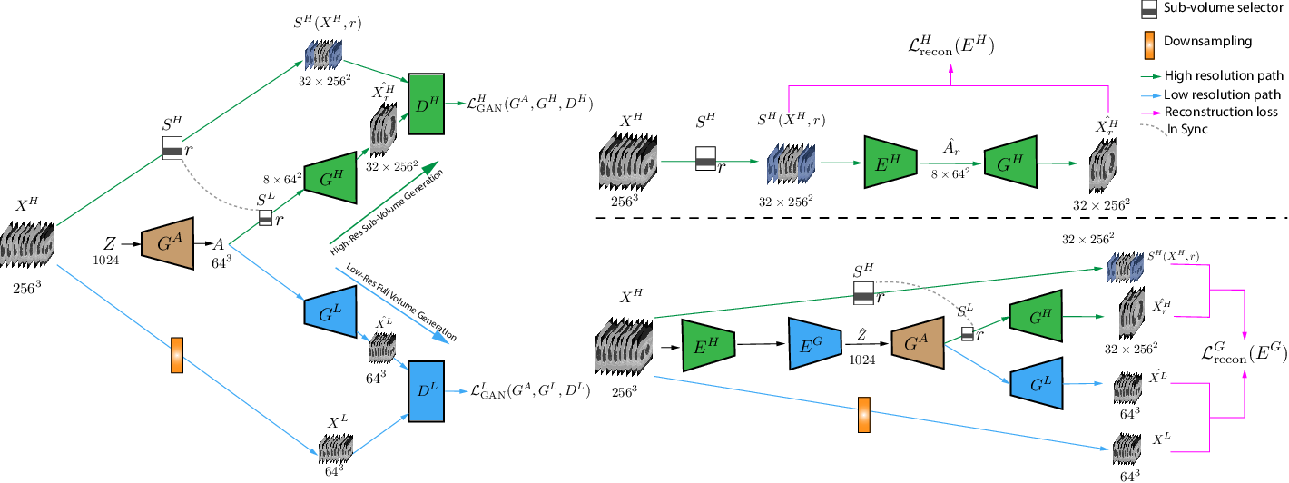 Figure 1 for Hierarchical Amortized Training for Memory-efficient High Resolution 3D GAN