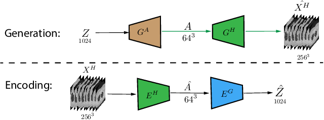 Figure 2 for Hierarchical Amortized Training for Memory-efficient High Resolution 3D GAN