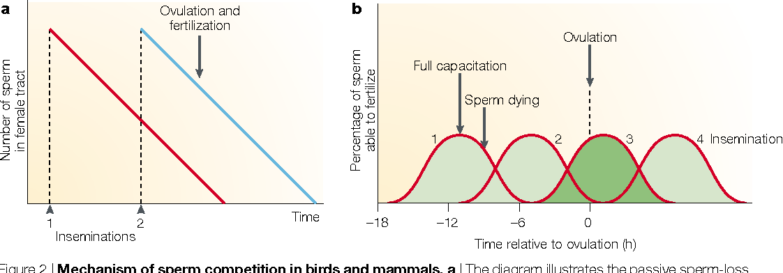 india-fuck-time-viable-sperm-in-female-poultry