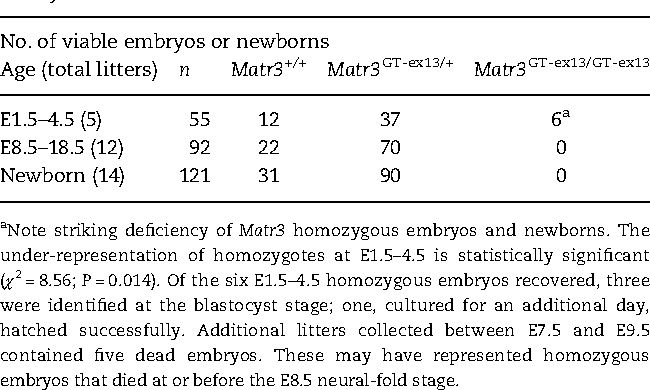 Table 1. Early embryonic lethality in Matr3GT-ex13 homozygousmouse embryos