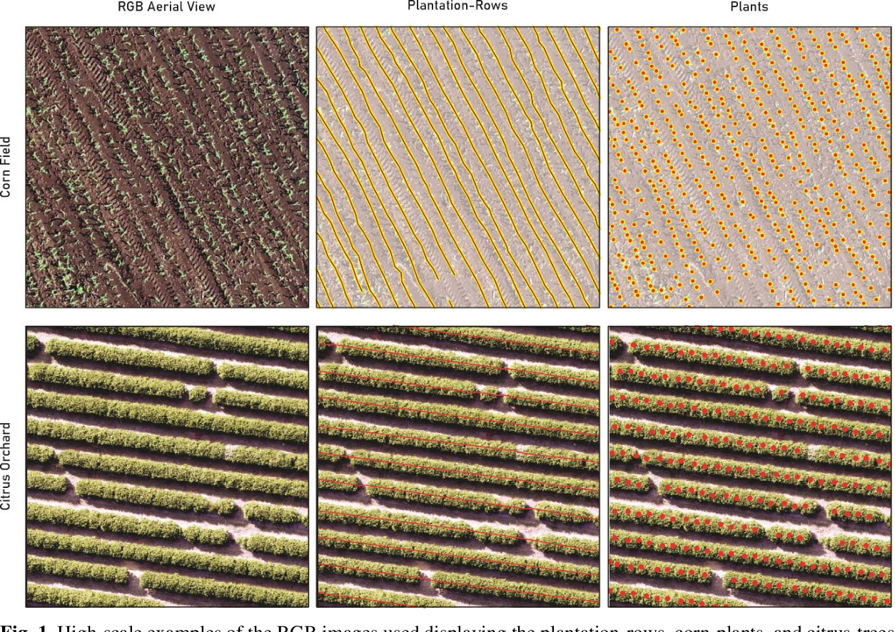 Figure 1 for A CNN Approach to Simultaneously Count Plants and Detect Plantation-Rows from UAV Imagery