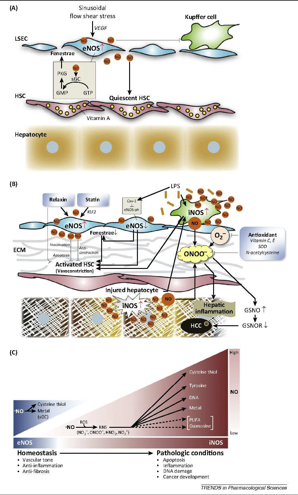 Figure 1 From Nitric Oxide In Liver Diseases Semantic Scholar Process Flow Diagram Acid The Role Of No Hepatic Sinusoids