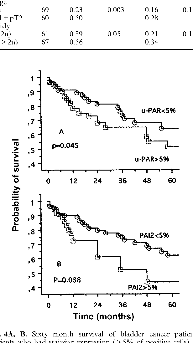 Fig. 4A, B. Sixty month survival of bladder cancer patients. Patients who had staining expression (>5% of positive cells) for uPA-R A or PAI2 B had a significantly shorter survival than those who did not
