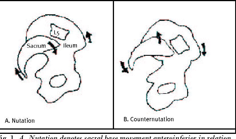Figure 1 From The Sacroiliac Joint Anatomy Physiology And Clinical