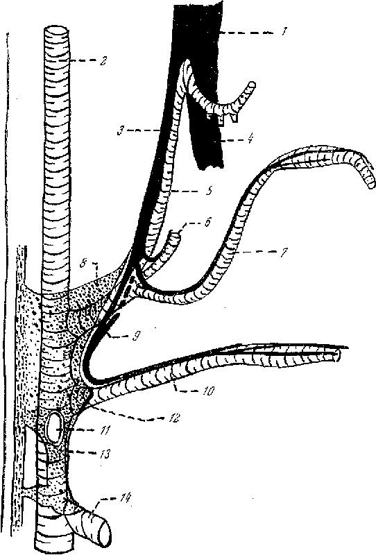 Essai d\'analyse du plexus solaire (plexus coeliacus), chez l\'Homme ...