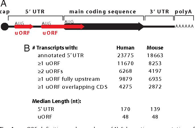 Open Reading Frames - Semantic Scholar