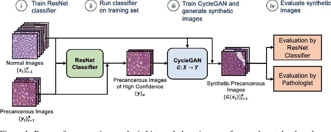 Figure 1 for Generative Image Translation for Data Augmentation in Colorectal Histopathology Images