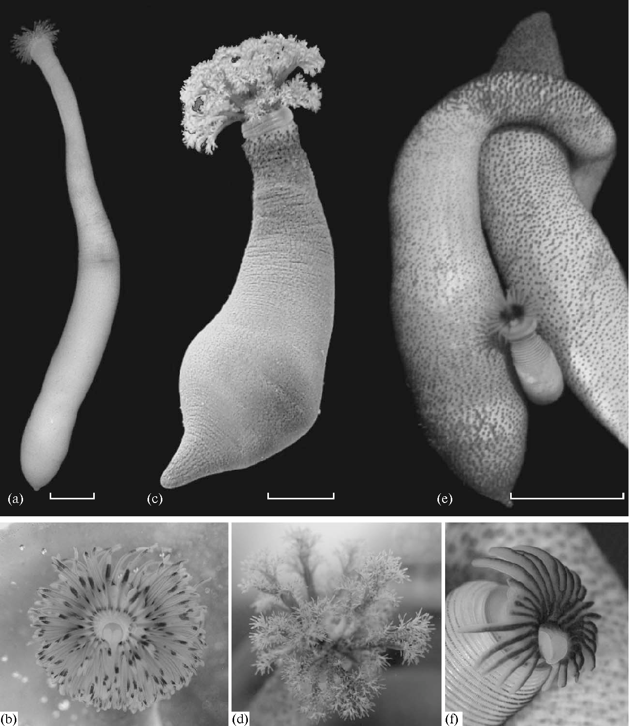 Figure 1 from Reproduction and development of common species of
