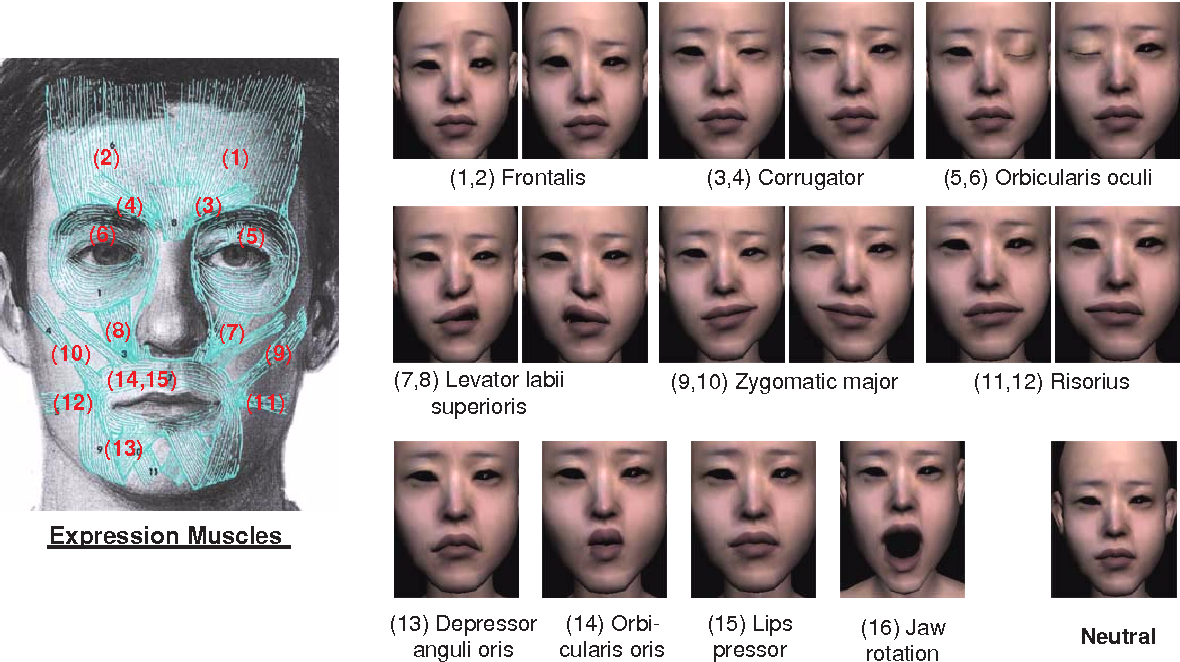 Figure 1 From Analysis And Synthesis Of Facial Expressions With Hand