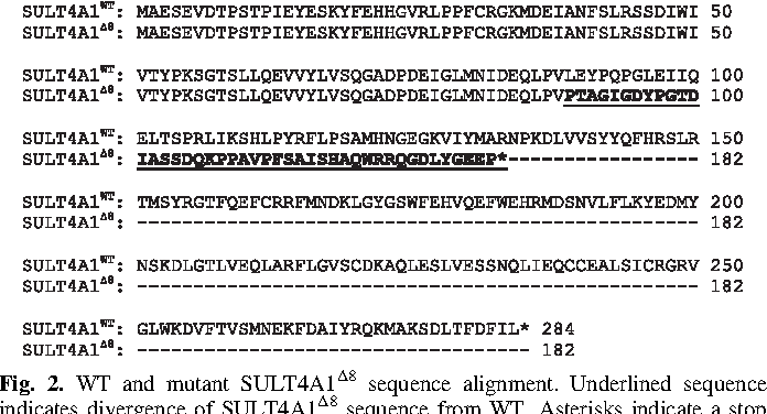 Fig. 2. WT and mutant SULT4A1D8 sequence alignment. Underlined sequence indicates divergence of SULT4A1D8 sequence from WT. Asterisks indicate a stop codon.