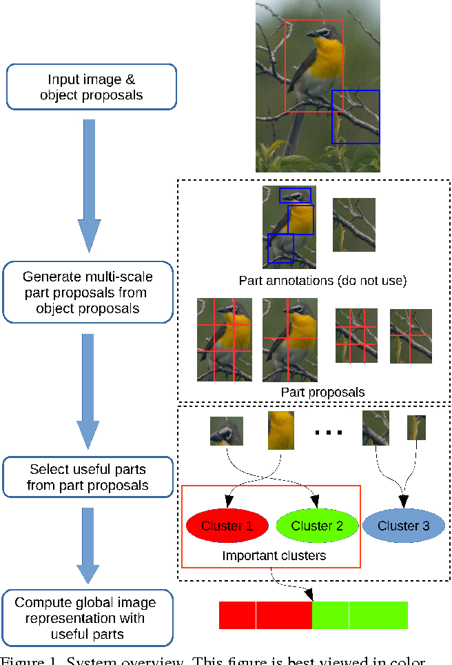 Figure 1 for Weakly Supervised Fine-Grained Image Categorization