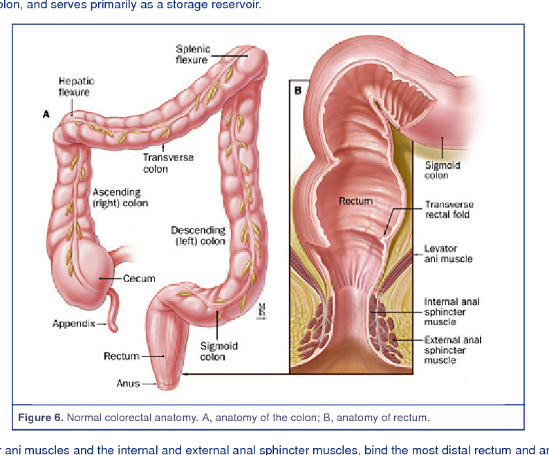 Figure 20 from Sporadic ( Nonhereditary ) Colorectal Cancer ...