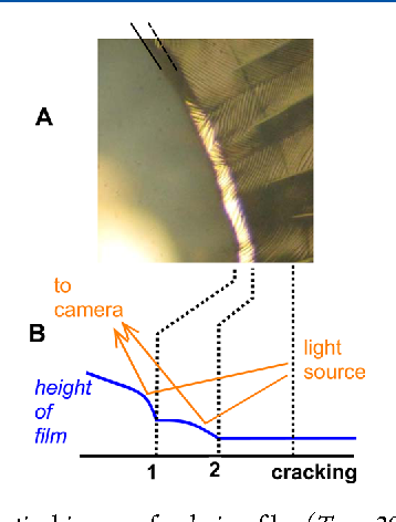 Coarsening Of The Pore Network In Drying Latex Films Upon