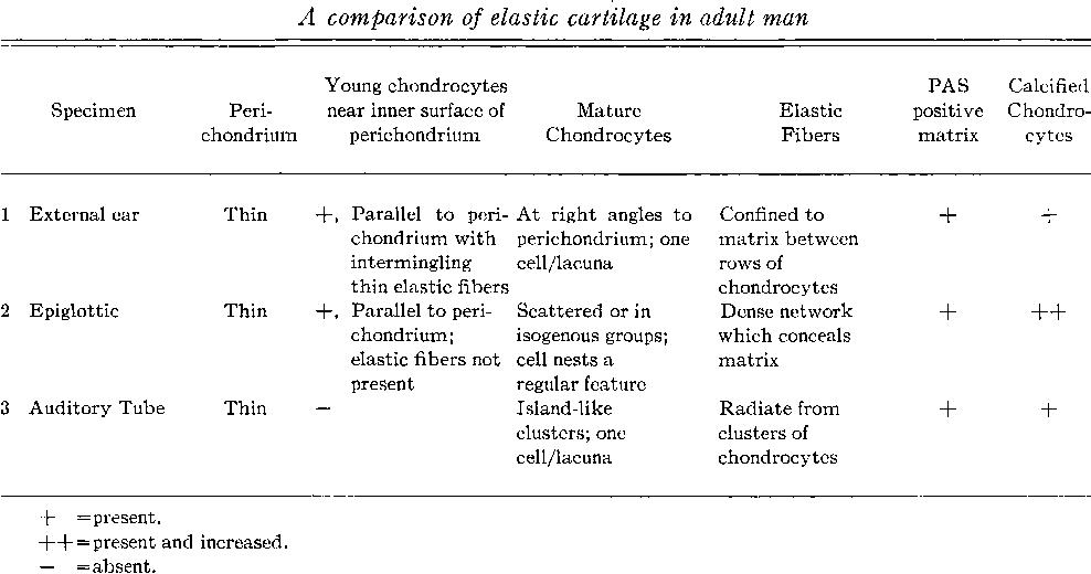 Epiglottic Cartilage