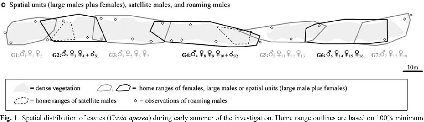 Large males dominate: ecology, social organization, and mating ...