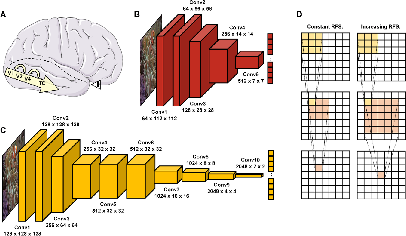 Figure 1 for Comparing object recognition in humans and deep convolutional neural networks -- An eye tracking study