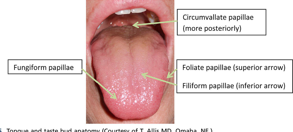 Figure 5 From Smell And Taste Disorders Semantic Scholar