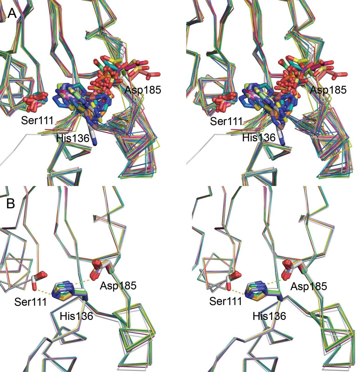 Figure 25. Overlay of the catalytic sites in ClpP.