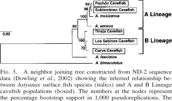 Blind Fish Diagram Car Fuse Box Wiring Diagram