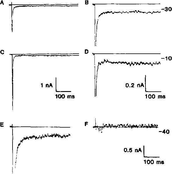 FIGURE 3. (A-D) Current traces recorded in neurons dissociated from the CA1 region of hippocampal slices. Currents were generated by voltage steps from a holding potential of - 1 0 0 to - 3 0 mV in A and B and to - 1 0 mV in C and D. Traces in B and D are the same as in A and C except they are shown at higher gain to make the sustained currents more prominent. Vertical calibrations: 1 nA for A and C, 0.2 nA for B and D. Horizontal calibrations: 100 ms. (E and F) Current traces recorded in response to voltage pulses from - 1 0 0 to - 4 0 mV in another neuron before (E) and after (F) exposure to TI'X. Vertical calibration, 0.5 nA. Horizontal calibration, 100