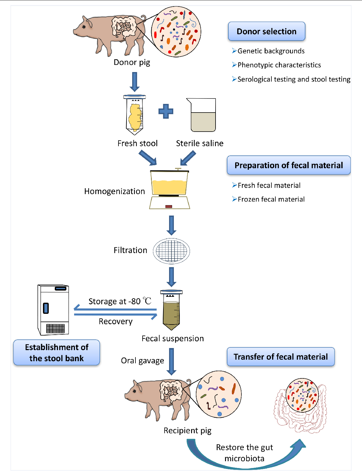 Preparations that restore intestinal microflora