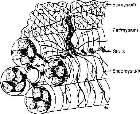 Figure 1 From The Cell Biology Of The Cardiac Interstitium